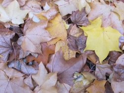 patchwork of leaves - Copy